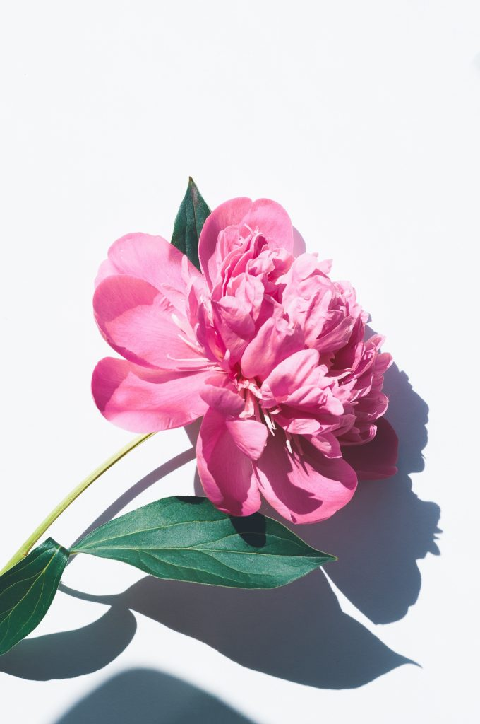 villa-fleurie-rosmalen